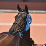 Sologn'Pony National Pfs