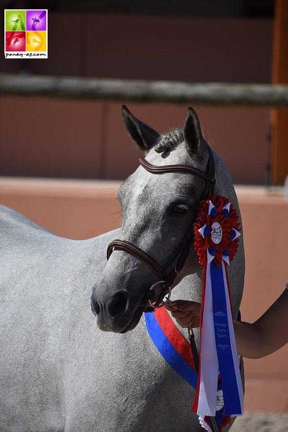 Foxy Lady DMB, championne des femelles de 3 ans poneys de sport - ph. Poney As