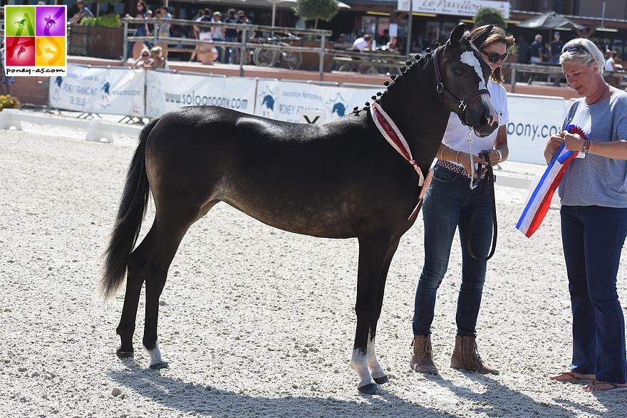 Hopium'N Boni, championne Suprême des femelles Pfs - ph. Poney As