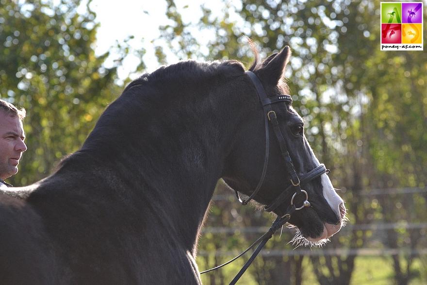 Valido photographié à l'automne 2015 chez ses naisseurs et propriétaires - ph. Pauline Bernuchon