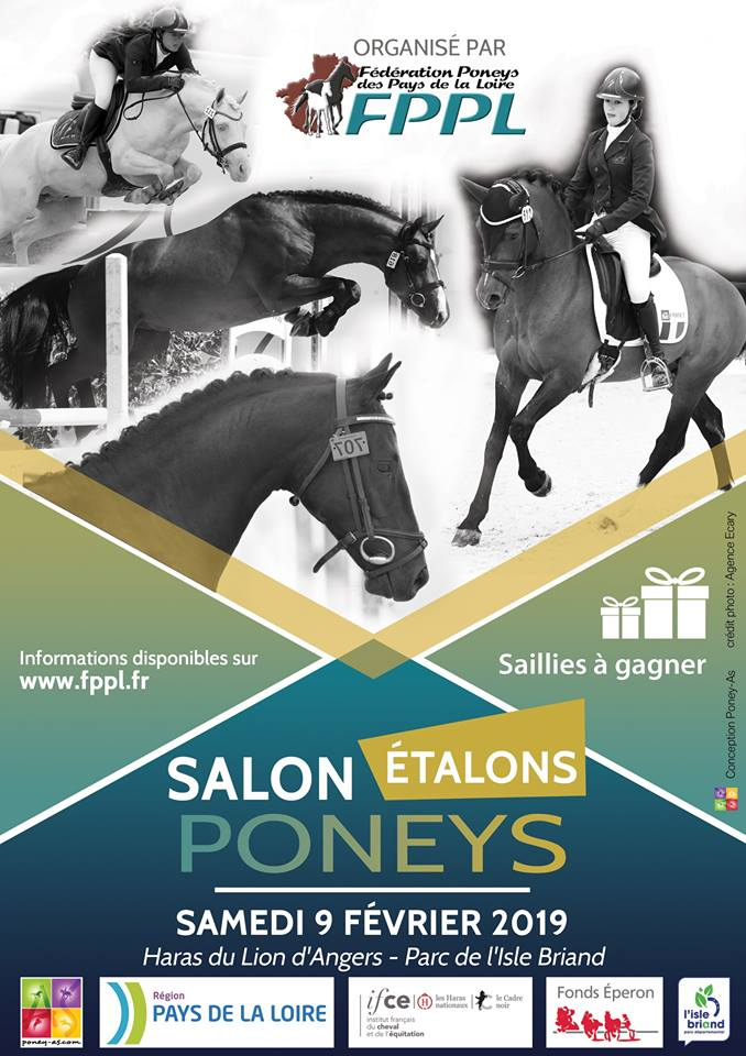 Salon des étalons du Lion d'Angers 2019