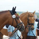 Dornik B et Dulcia, photo prise à Avenches en 2008 - ph. Poney As