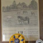 Toutes disciplines confondues, l'élevage de poneys de Hans-Georg Bönniger est le meilleur de tous les temps - ph. Poney As