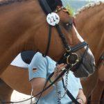 L'étalon Dornik B photographié en 2008 lors des championnats d'Europe d'Avenches. L'un des plus grands athlètes du circuit Poney de tous les temps et reproducteur hors pair – ph. Poney As