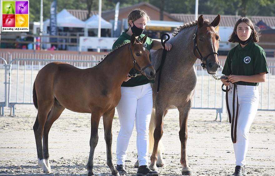 Haywards Klassique, championne des poulinières suitées et son foal Kingdom de Karat par l'européen en CSO Emmickhoven's Diego SL - ph. Poney As