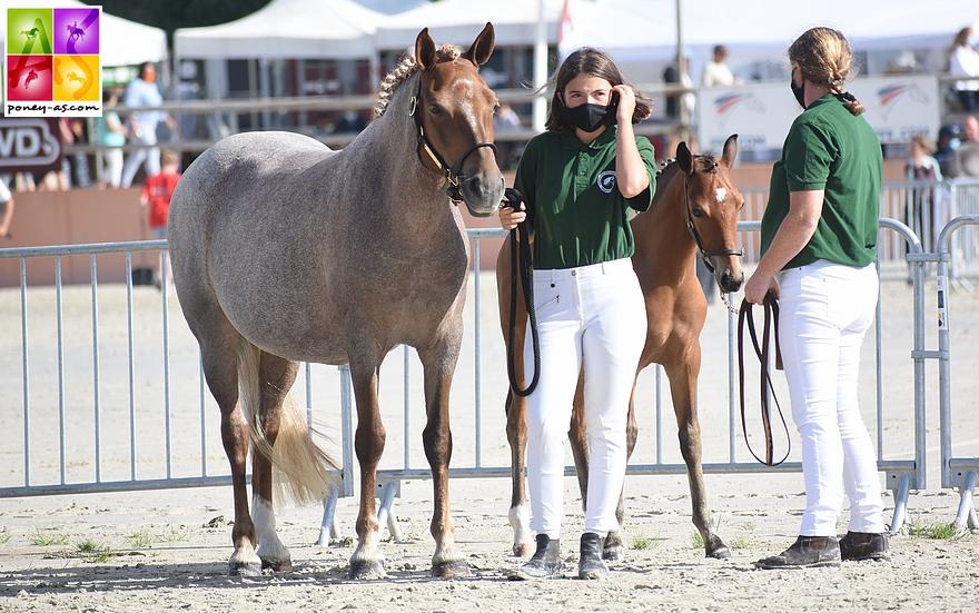 Haywards Klassique, championne des poulinières suitées et son foal Kingdom de Karat par l'européen en CSO Emmickhoven's Diego SL, le coup de cœur du jury - ph. Poney As