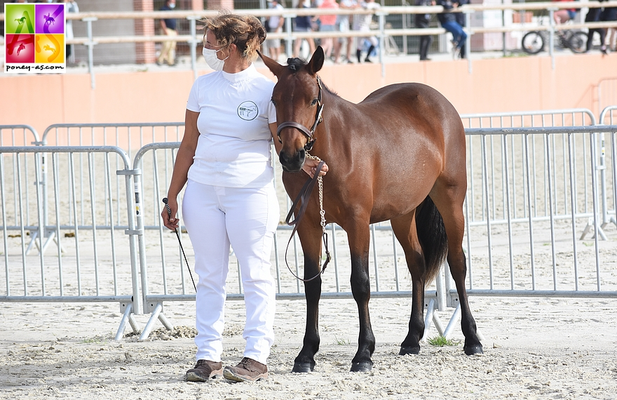 Nutschullyng Natural Beau - ph. Poney As