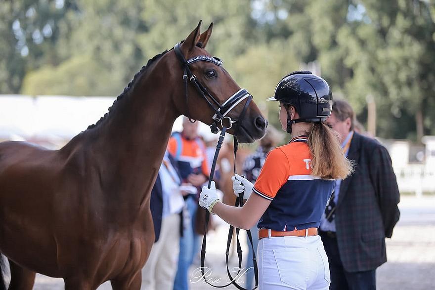 Brouwershaven Uthopia II, monté par la Néerlandaise Sita Hopman lors des championnats d'Europe de Pilisjászfalu, est désormais associé à la jeune Valentine Bineau – ph Rose Harang