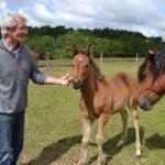 Pendant 30 ans, Olivier Despierres a élevé des poneys New Forest sous l'affixe de l'Ocq. Il fut aussi le président de l'AFPNF de 1994 à 2007 - ph. Lucile Chavane